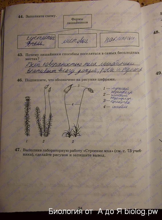 Гдз биология 6 класс пасечник рабочая тетрадь пасечник