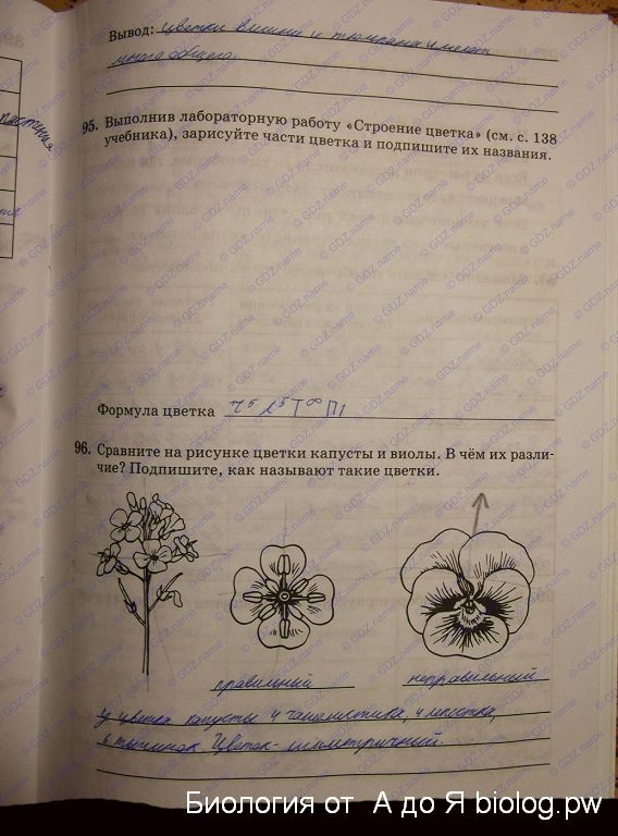 Гдз Биология 6 Класс Рабочая Тетрадь Снисаренко