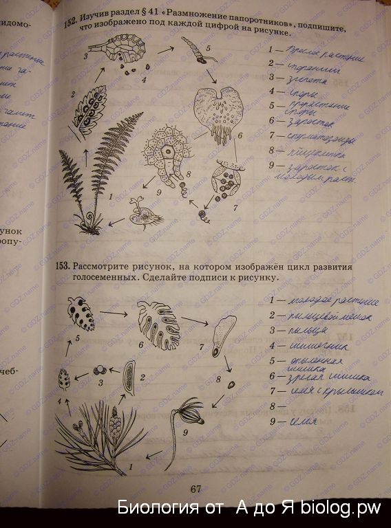 Готовые рабочая тетрадь домашние 6 по биология класс задания