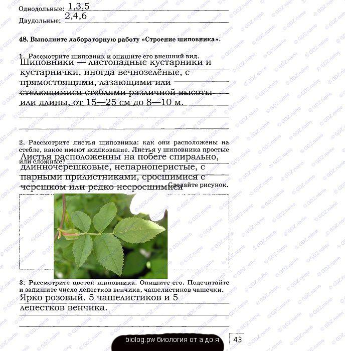 ГДЗ рабочая тетрадь по биологии 9 класс Мамонтов Захаров