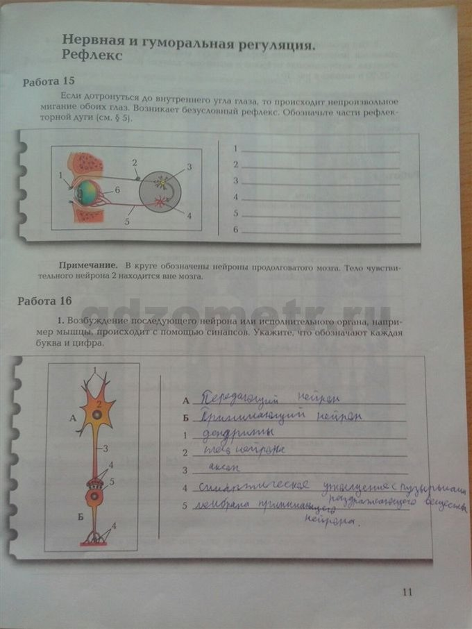 Решебник биология 8 маш