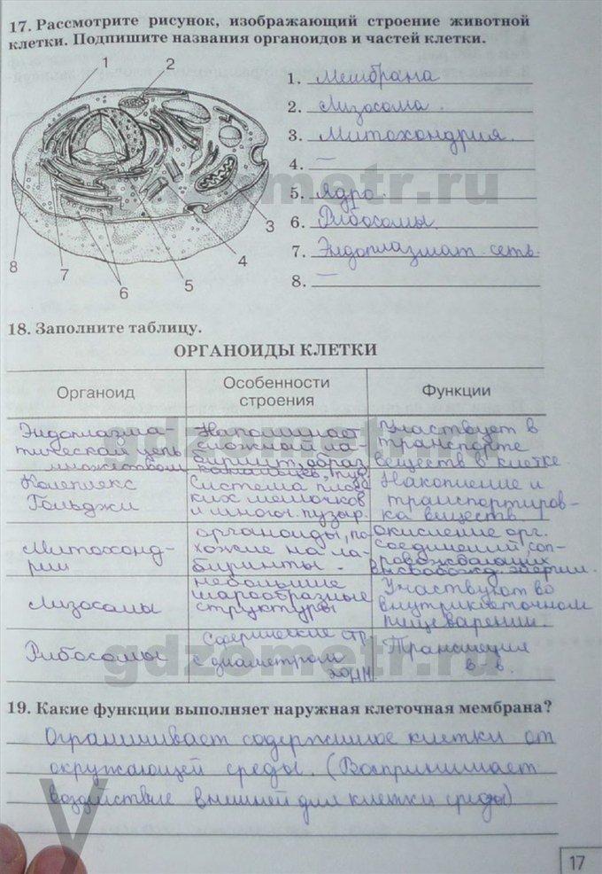 Ответы на рабочую тетрадь по биологии 8 класс сонин