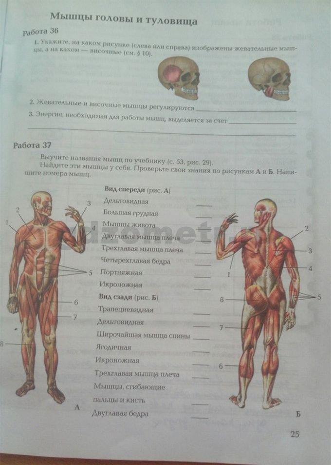 Решебник По Биологии 8 Класс Маш Проверь Себя