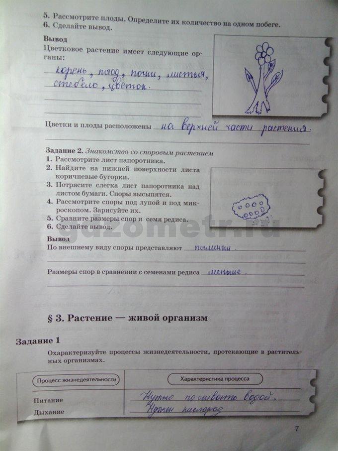 ГДЗ ответы по информатике 6 класс Босова рабочая тетрадь ФГОС