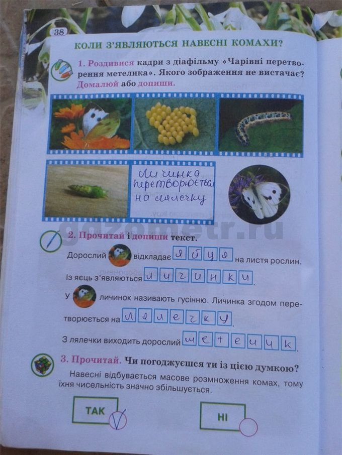 гдз по природознавству 2 клас грущинська